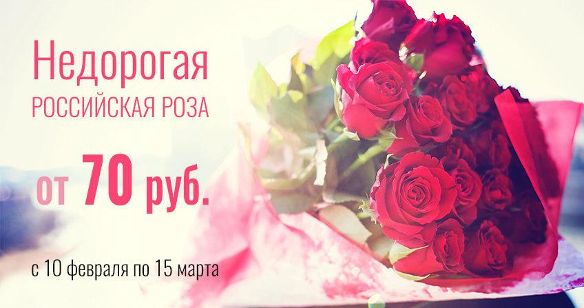 Недорогая российская роза от 70 руб.