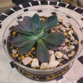Флорариум с суккулентом №1