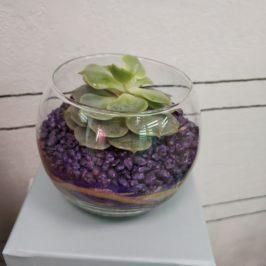 Флорариум с суккулентом №3